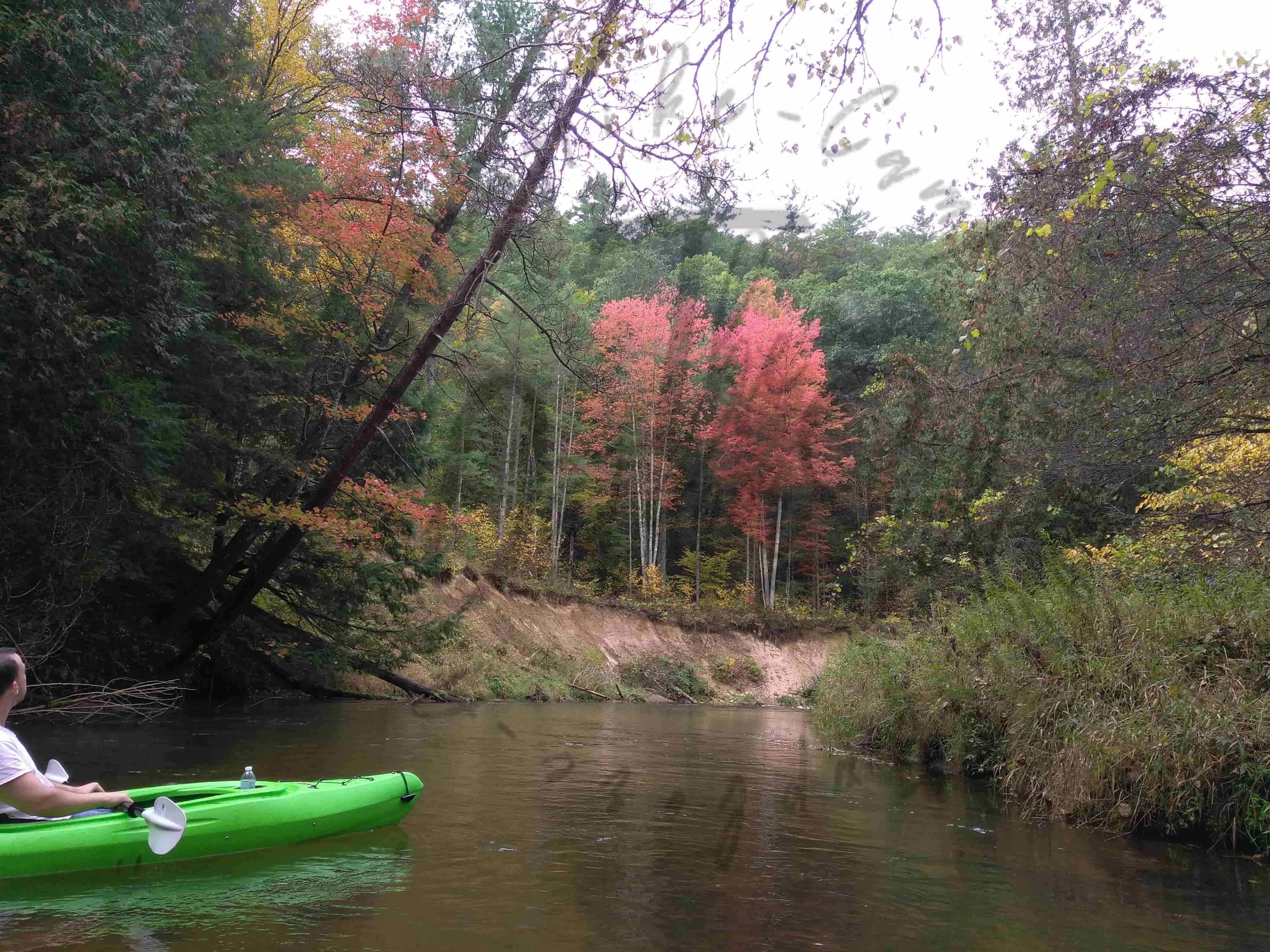 fall colors on trees while kayaking the pine river