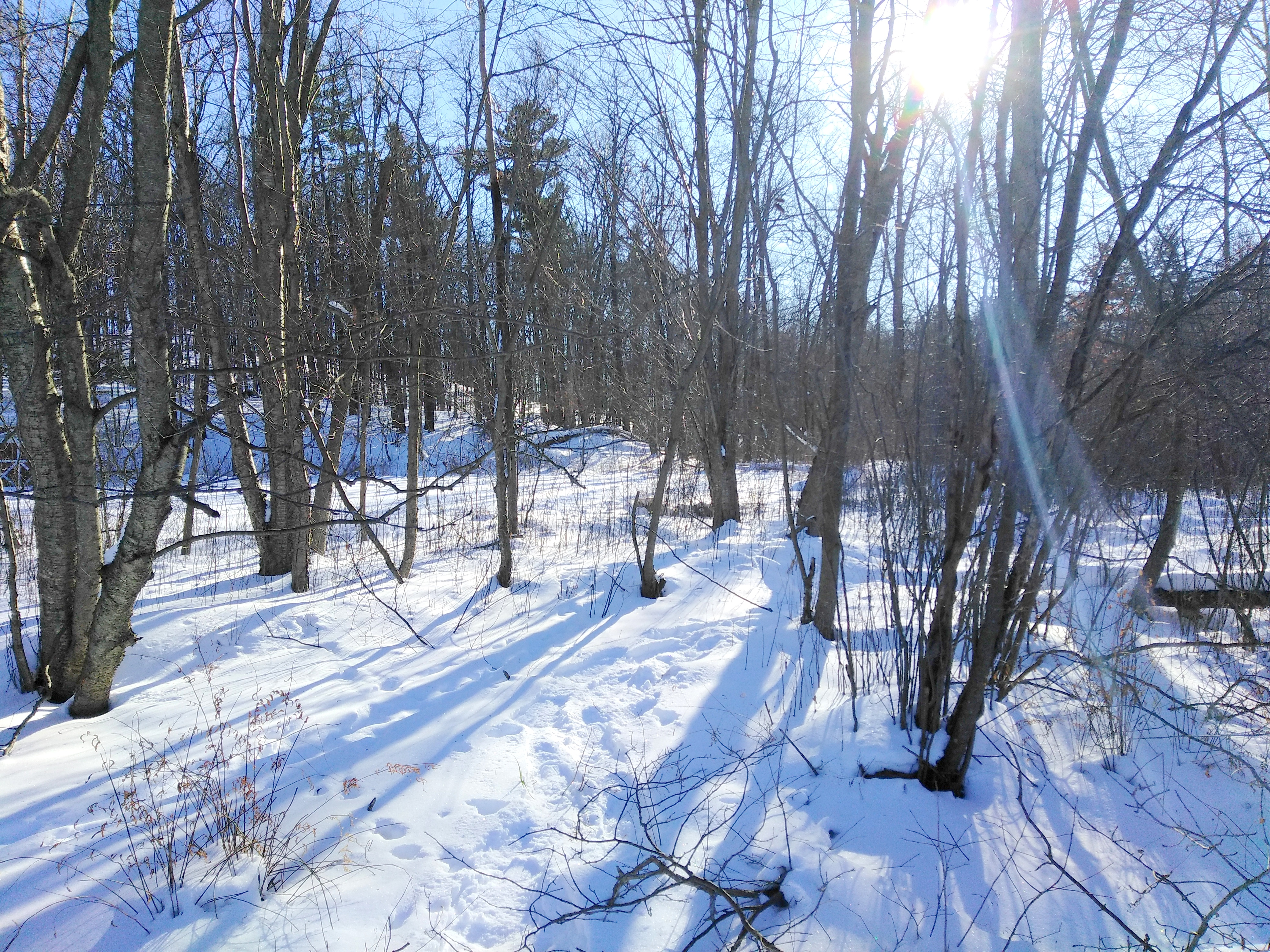 sun peaking through the trees snowshoeing at lost lake