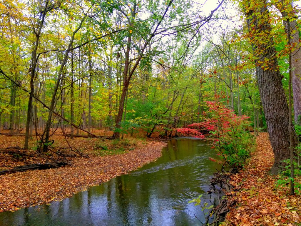 nature_preserve_river_fall