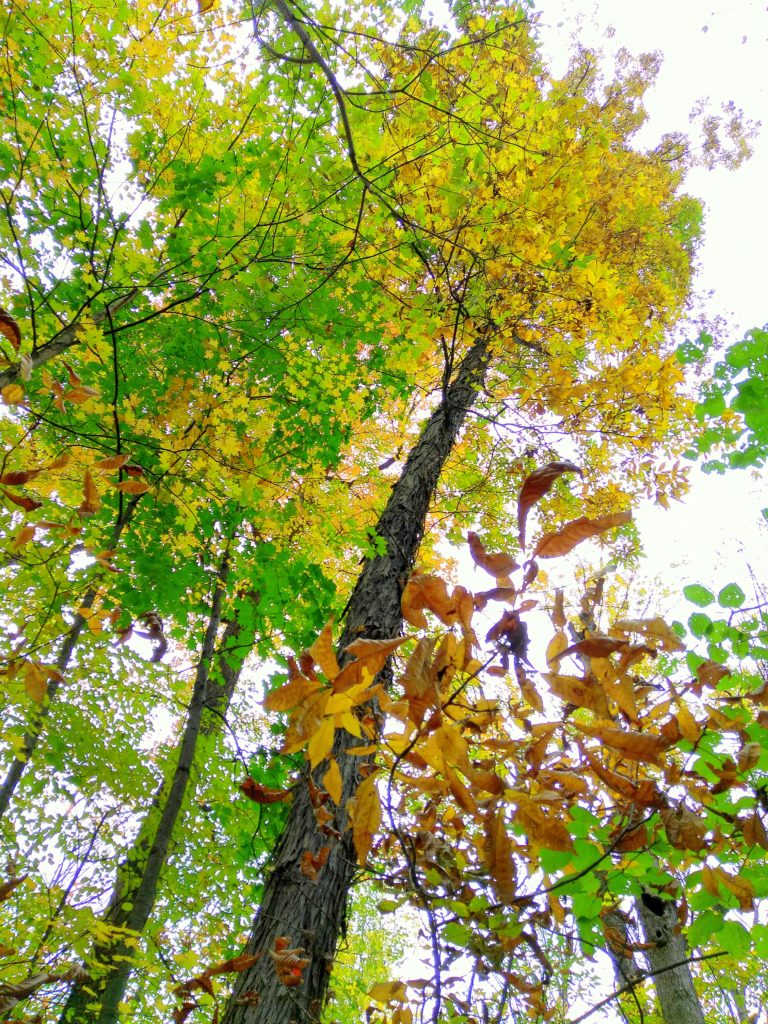 nature_photo_fall_tree_from_the_ground
